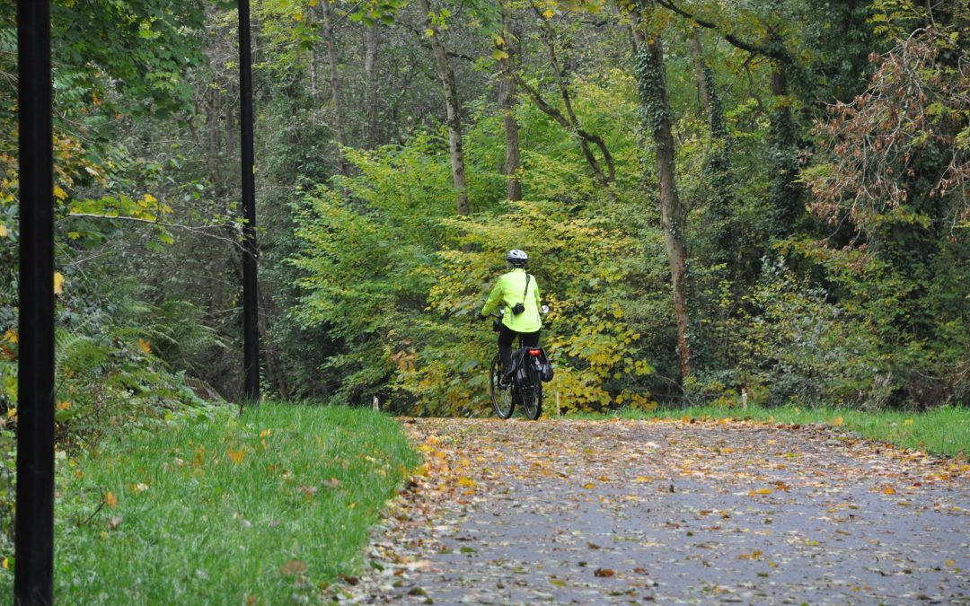 – Ballybrack Woods (Mangala) Pathway, Douglas, Cork